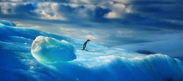 Penguin on the Ice