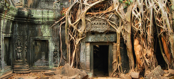 Ta Prohm at Ankgor Wat